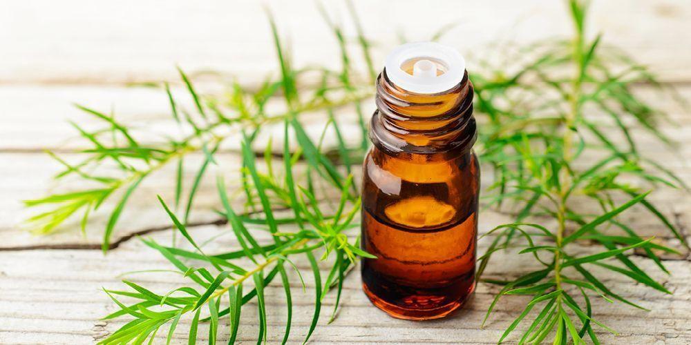khasiat minyak nilam
